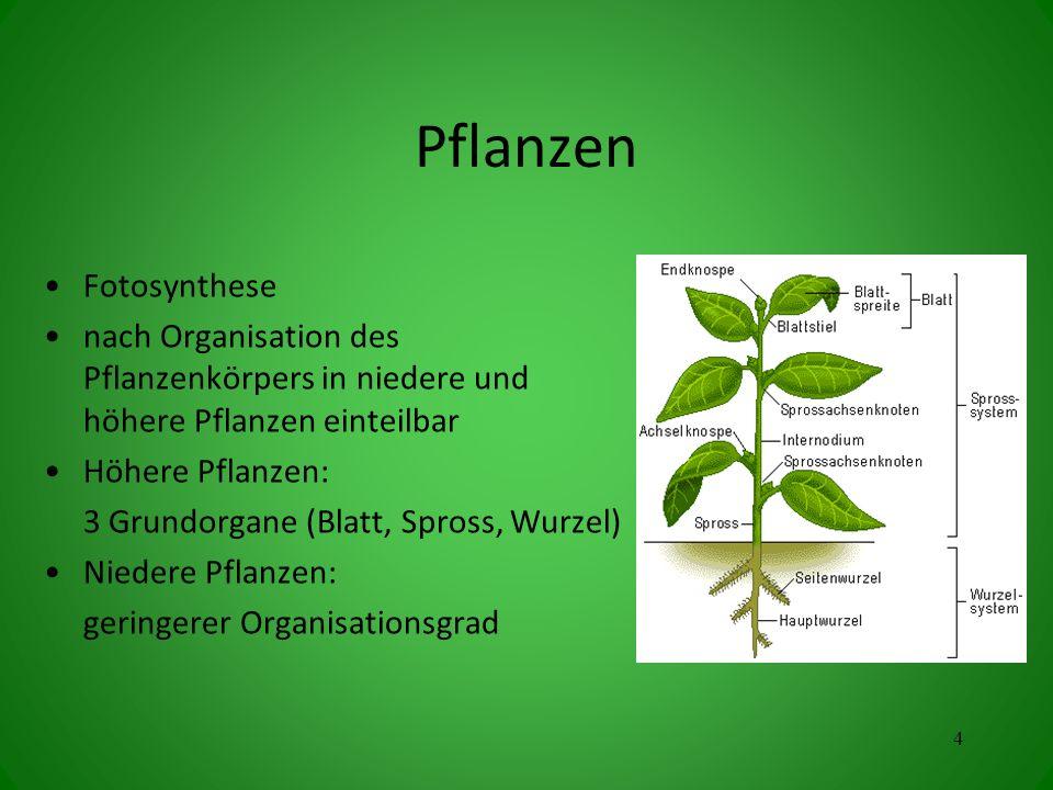 Pflanzen Fotosynthese