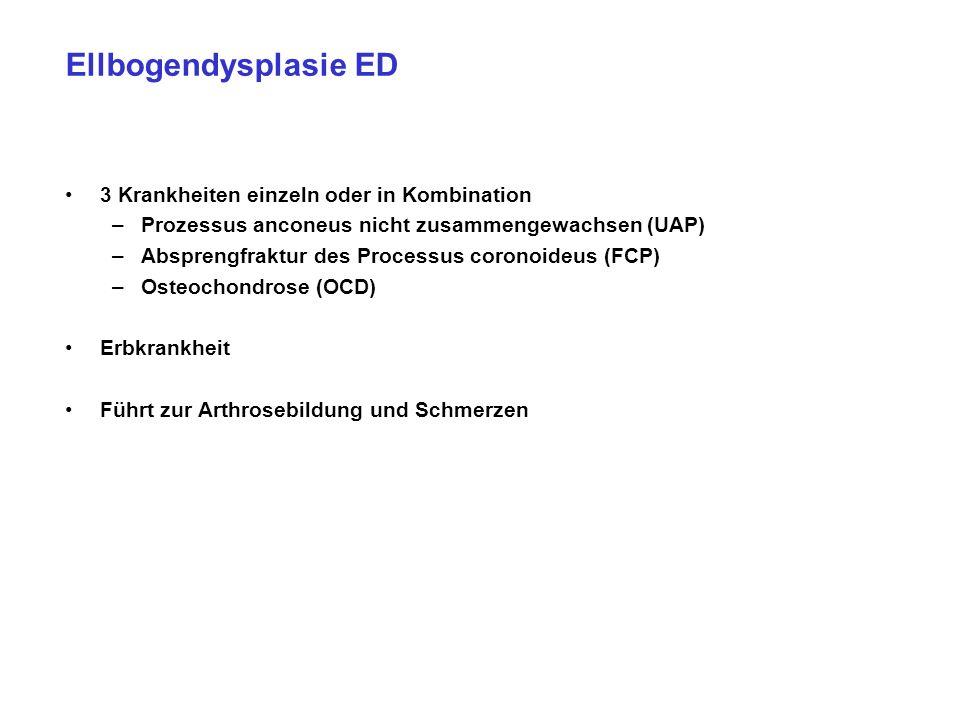 Ellbogendysplasie ED 3 Krankheiten einzeln oder in Kombination