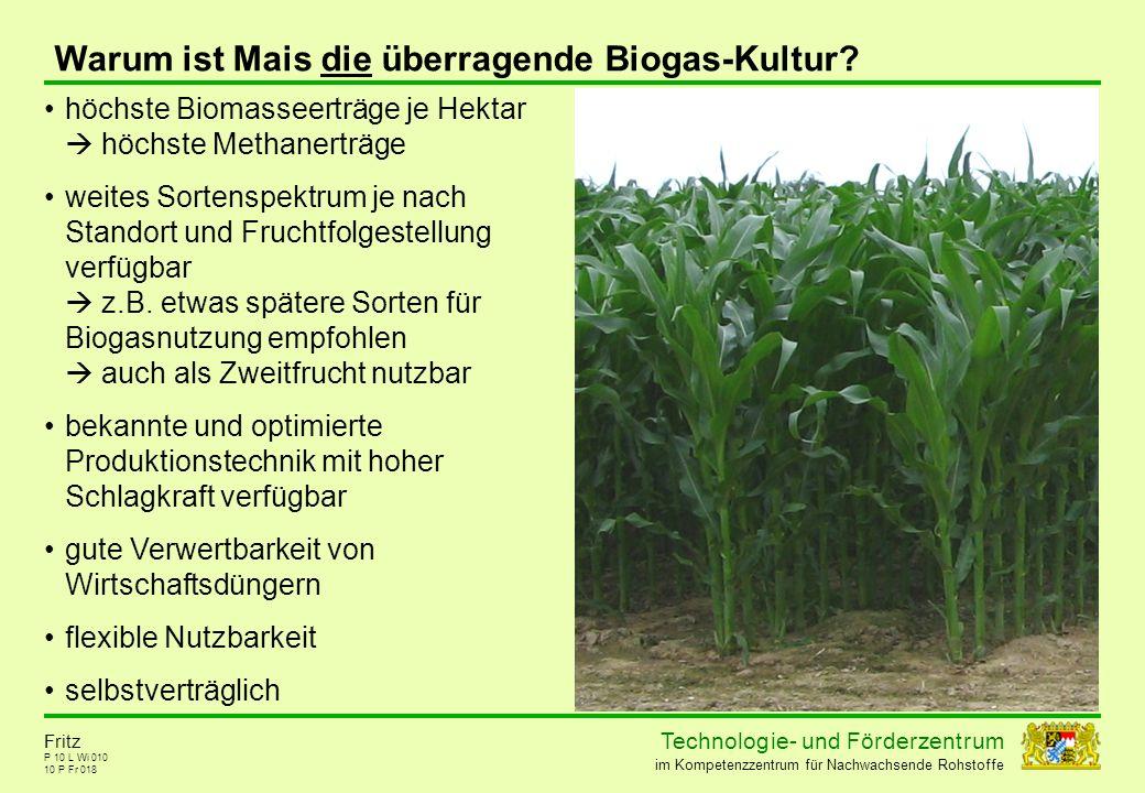 Warum ist Mais die überragende Biogas-Kultur