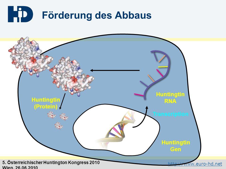 Förderung des Abbaus Huntingtin RNA Huntingtin (Protein) Transcription