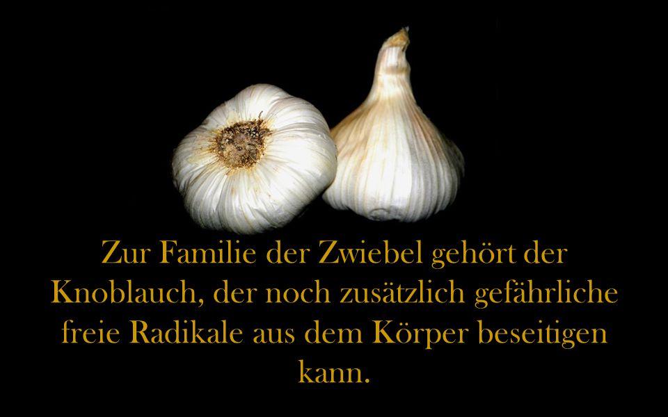 Zur Familie der Zwiebel gehört der Knoblauch, der noch zusätzlich gefährliche freie Radikale aus dem Körper beseitigen kann.