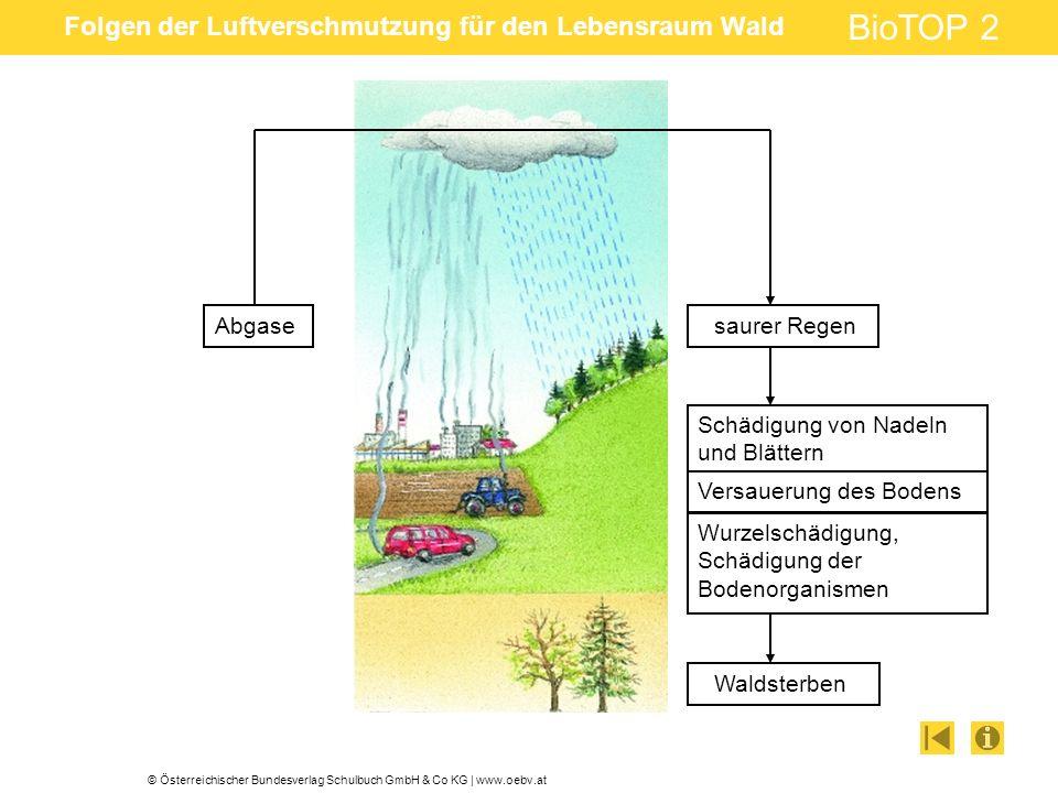 Folgen der Luftverschmutzung für den Lebensraum Wald