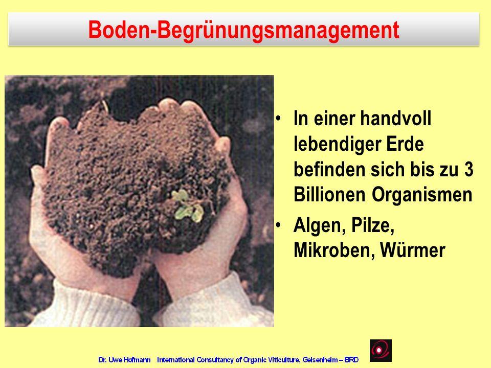 Boden-Begrünungsmanagement