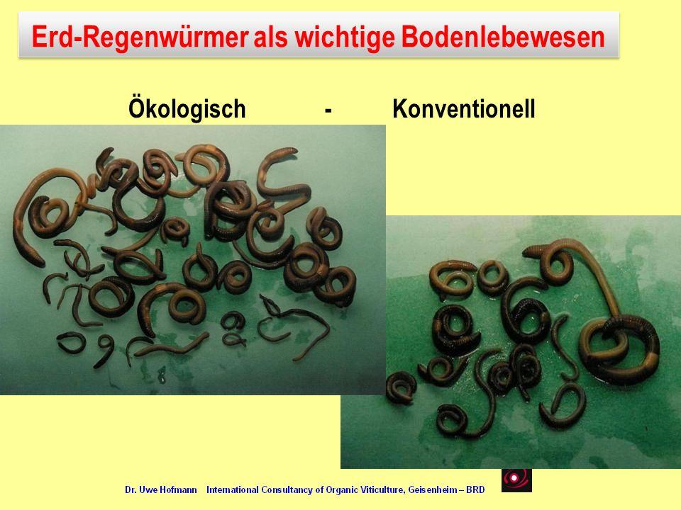 Erd-Regenwürmer als wichtige Bodenlebewesen Ökologisch - Konventionell