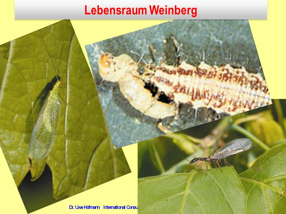 Lebensraum Weinberg