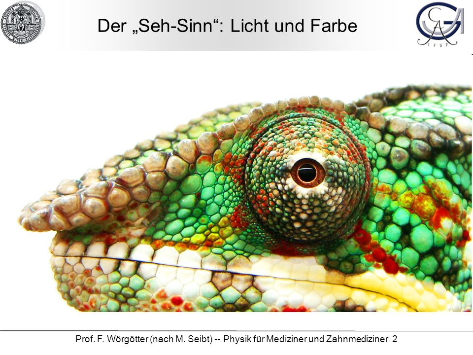 """Der """"Seh-Sinn : Licht und Farbe"""
