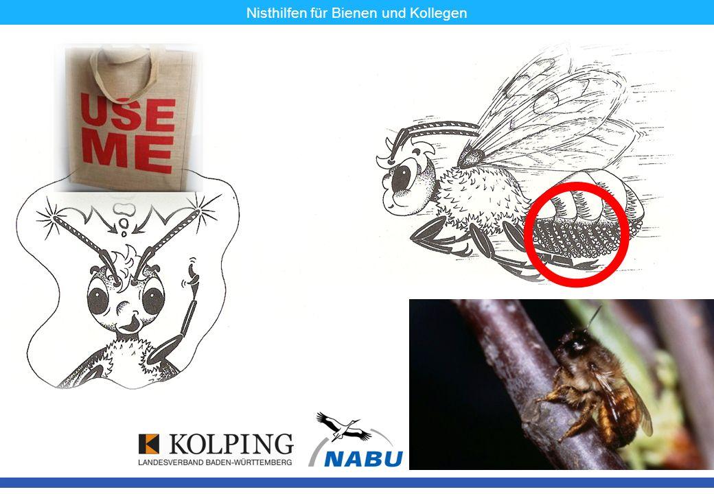 Nisthilfen für Bienen und Kollegen