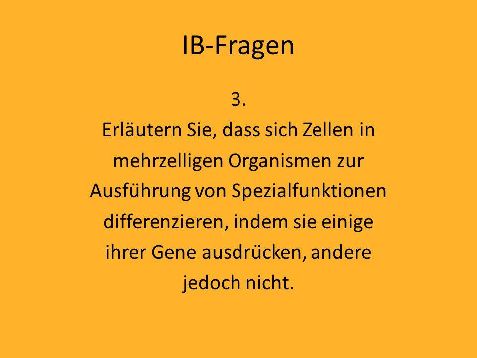 IB-Fragen