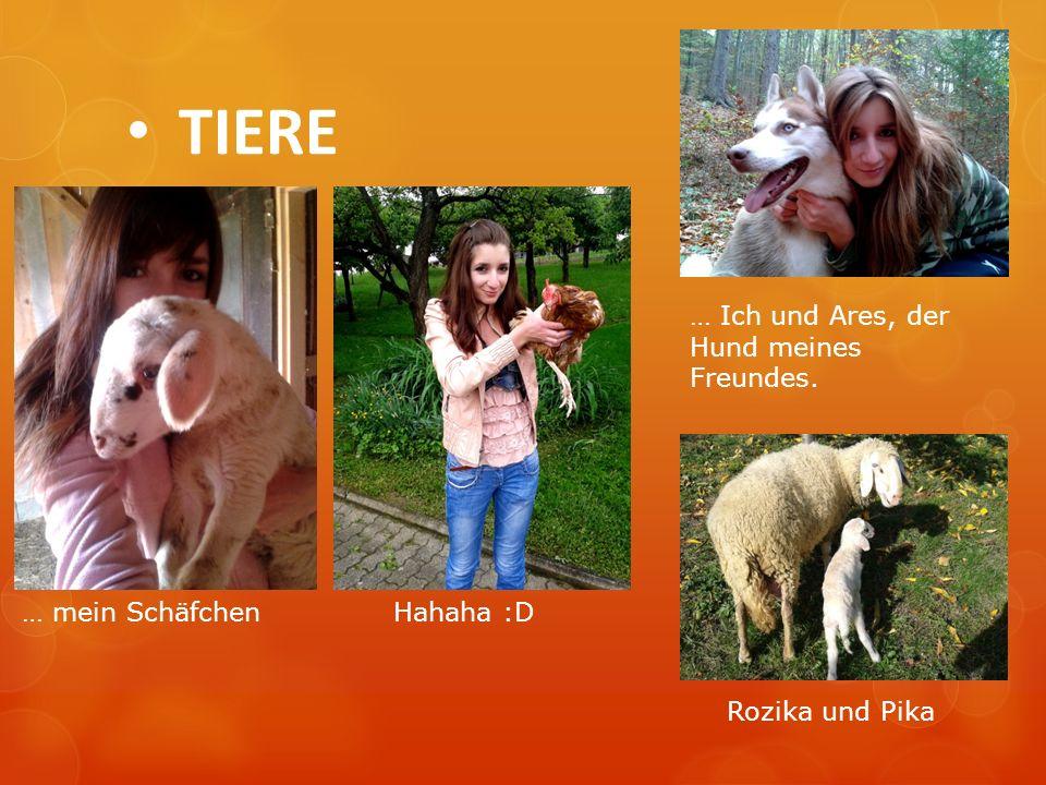 TIERE … Ich und Ares, der Hund meines Freundes. … mein Schäfchen
