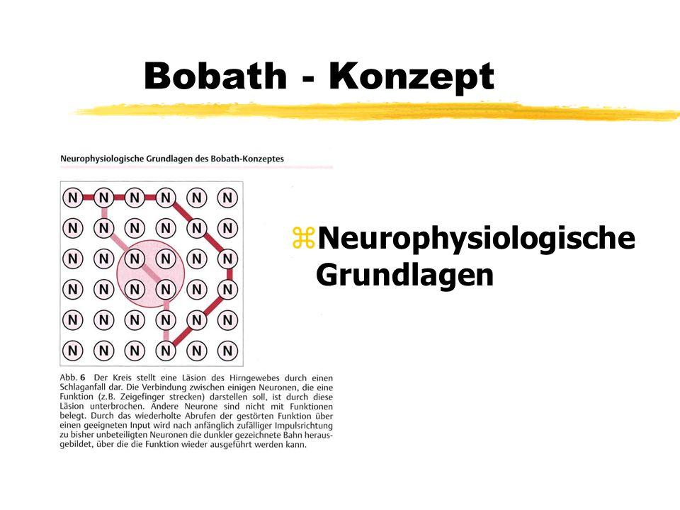 Bobath - Konzept Neurophysiologische Grundlagen