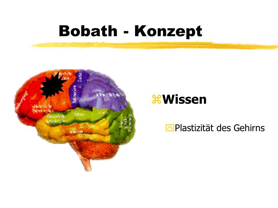 Bobath - Konzept Wissen Plastizität des Gehirns
