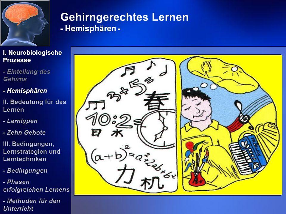 Gehirngerechtes Lernen - Hemisphären -