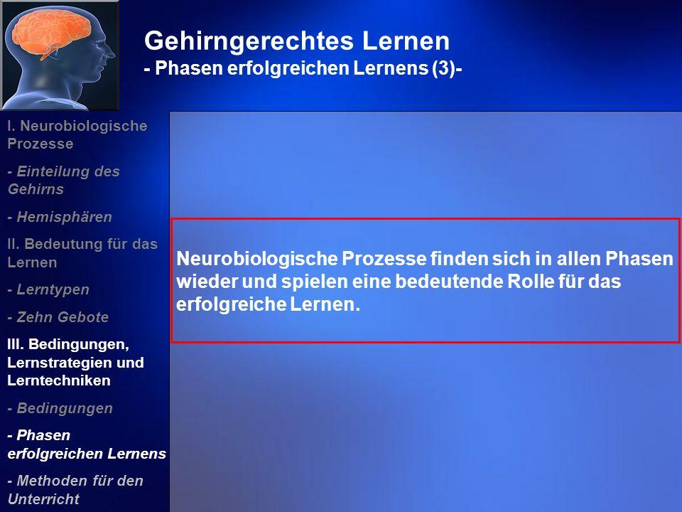 Gehirngerechtes Lernen - Phasen erfolgreichen Lernens (3)-