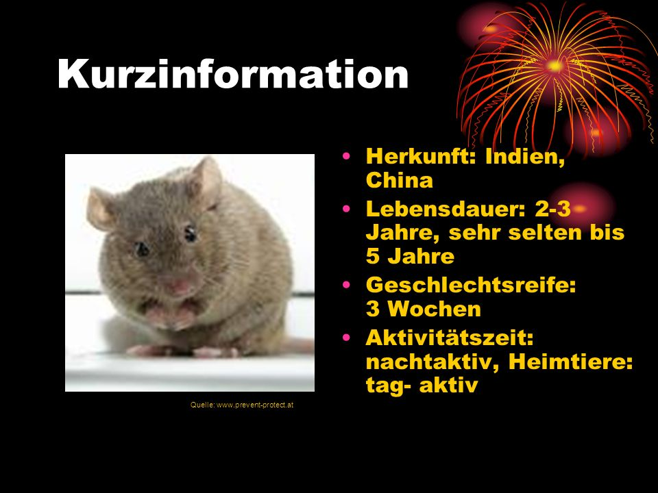 Kurzinformation Herkunft: Indien, China