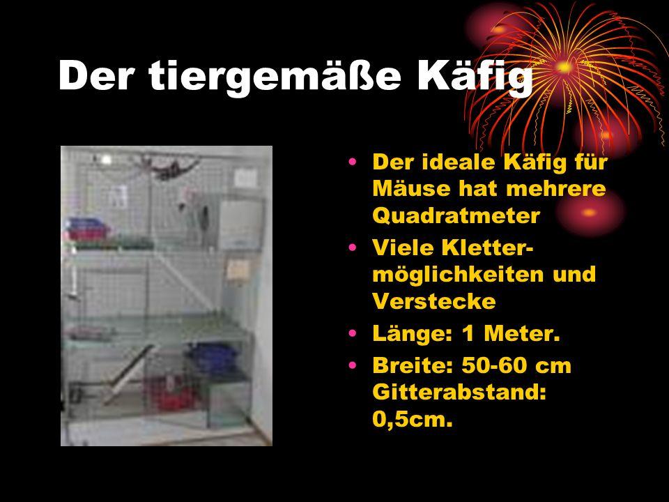 Der tiergemäße Käfig Der ideale Käfig für Mäuse hat mehrere Quadratmeter. Viele Kletter-möglichkeiten und Verstecke.
