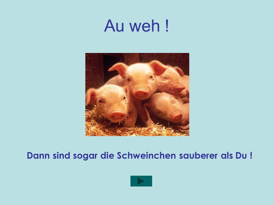 Dann sind sogar die Schweinchen sauberer als Du !