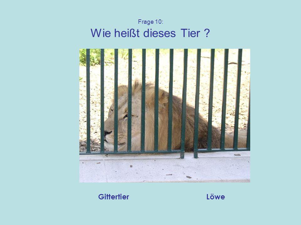 Frage 10: Wie heißt dieses Tier