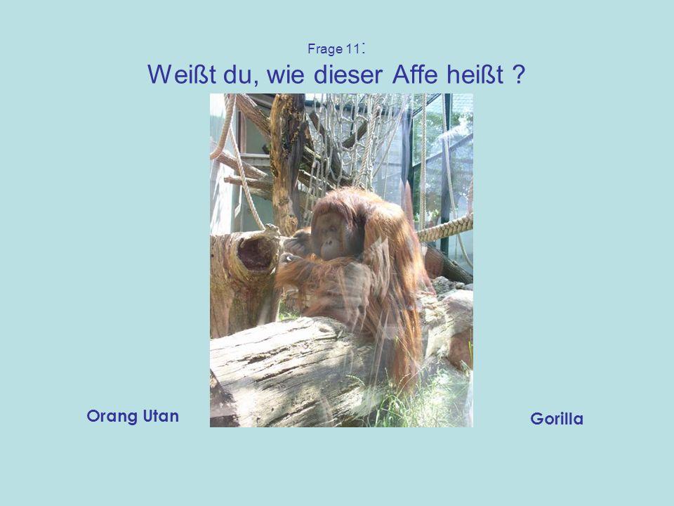 Frage 11: Weißt du, wie dieser Affe heißt
