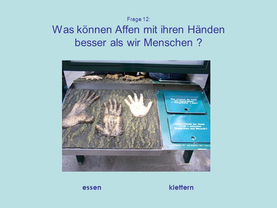 Frage 12: Was können Affen mit ihren Händen besser als wir Menschen