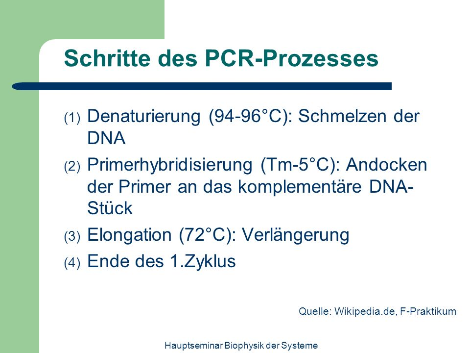 Schritte des PCR-Prozesses