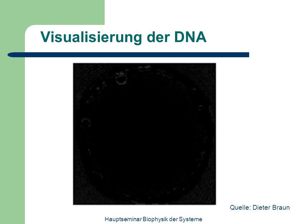 Visualisierung der DNA