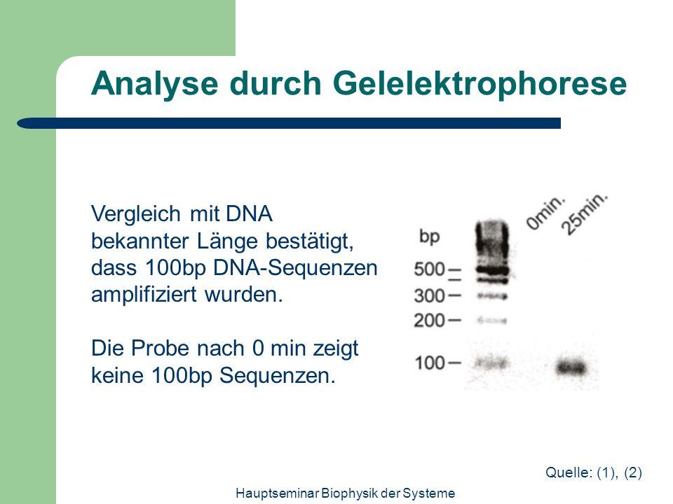 Analyse durch Gelelektrophorese