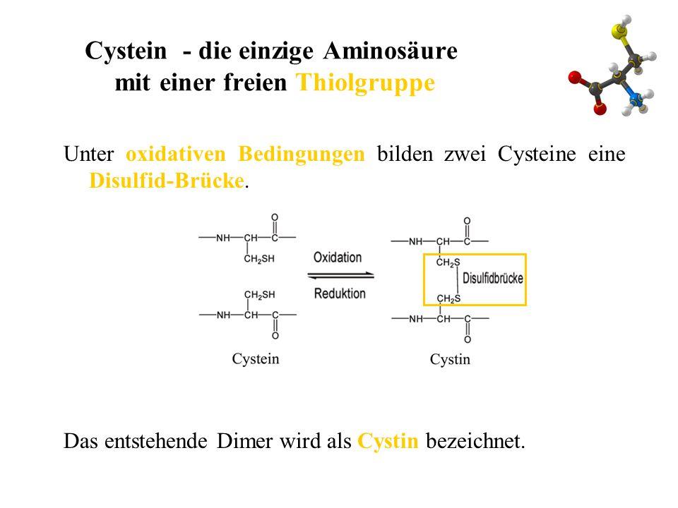 Cystein - die einzige Aminosäure mit einer freien Thiolgruppe
