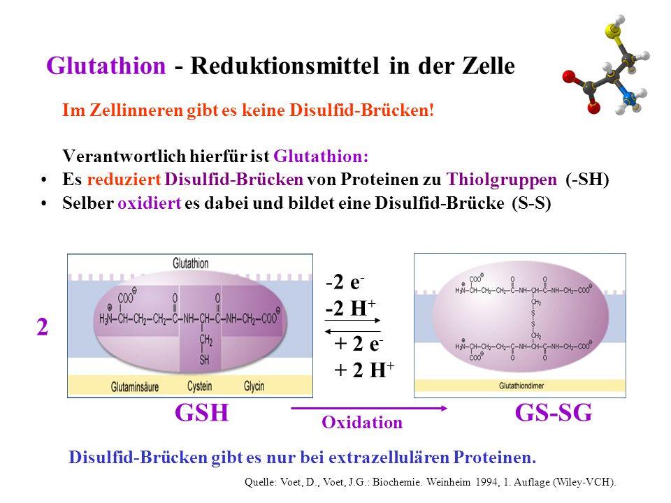 Glutathion - Reduktionsmittel in der Zelle