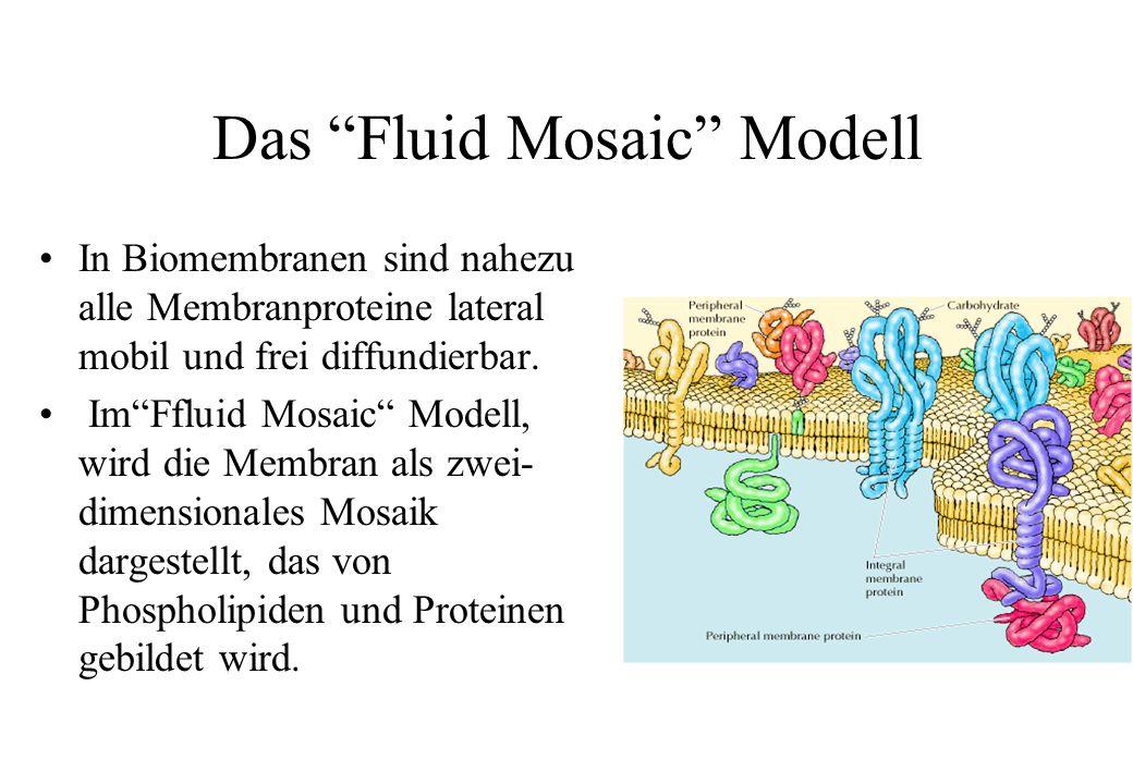 Das Fluid Mosaic Modell