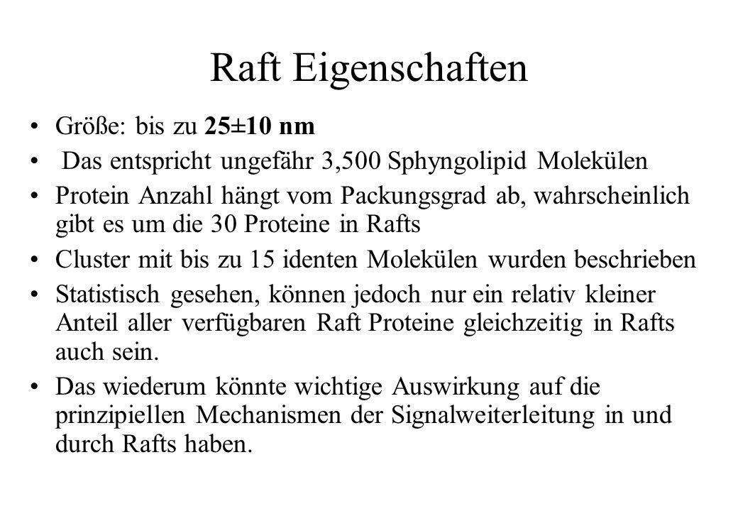 Raft Eigenschaften Größe: bis zu 25±10 nm