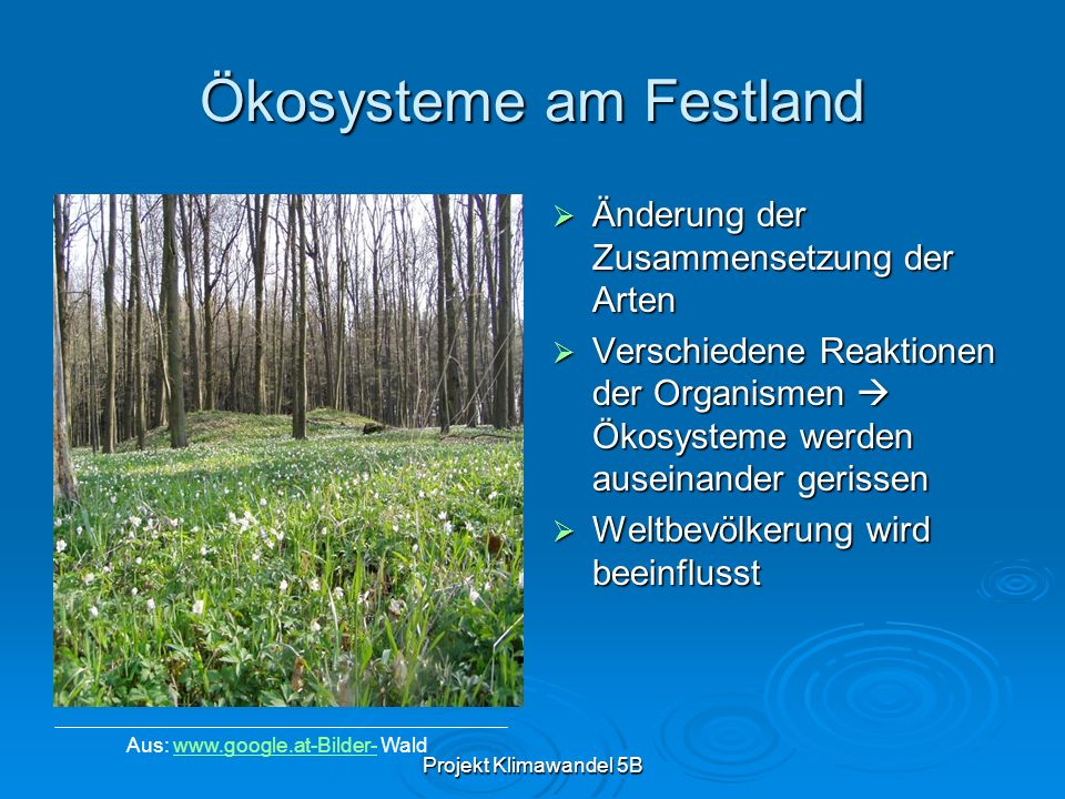 Ökosysteme am Festland