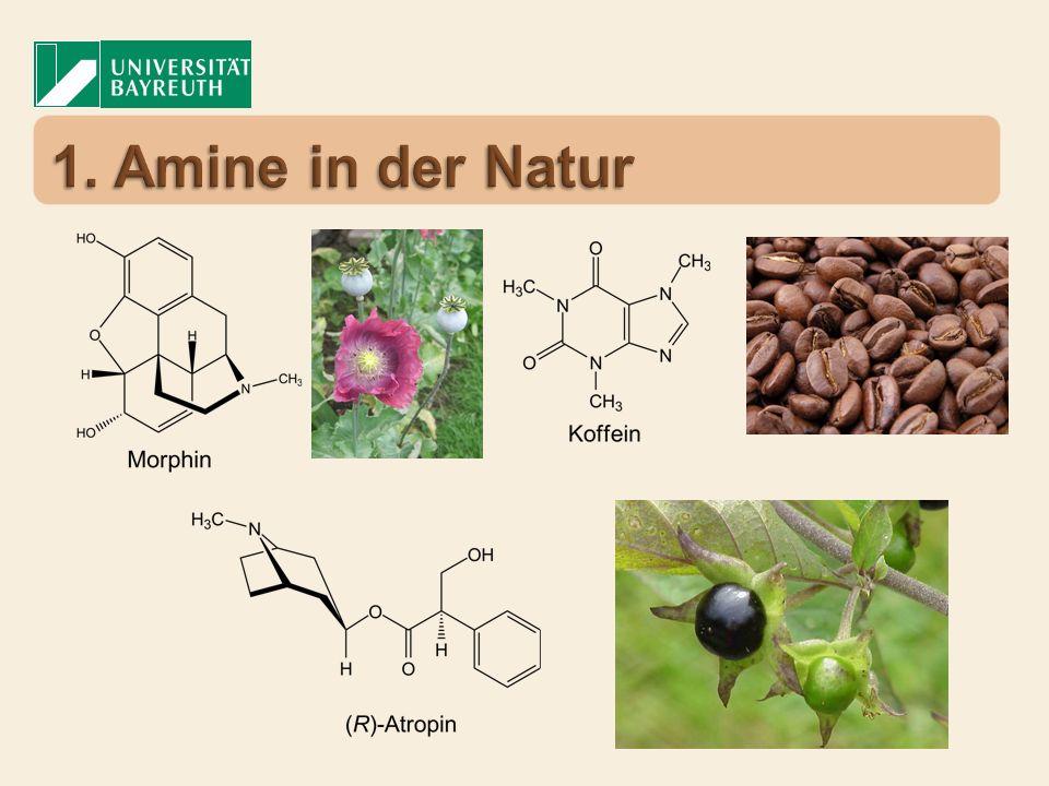 1. Amine in der Natur