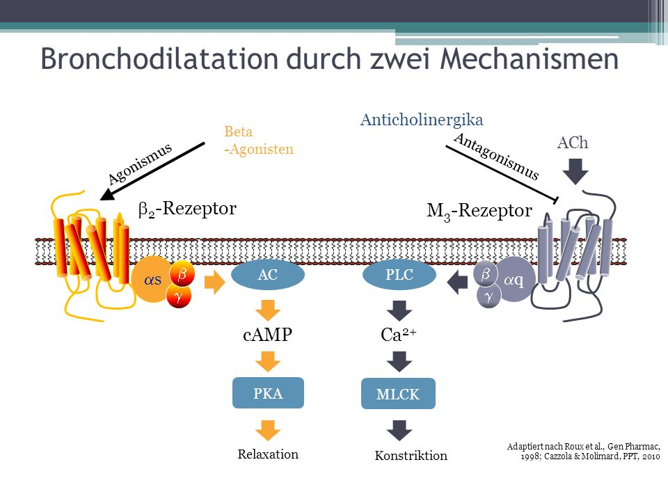 Bronchodilatation durch zwei Mechanismen