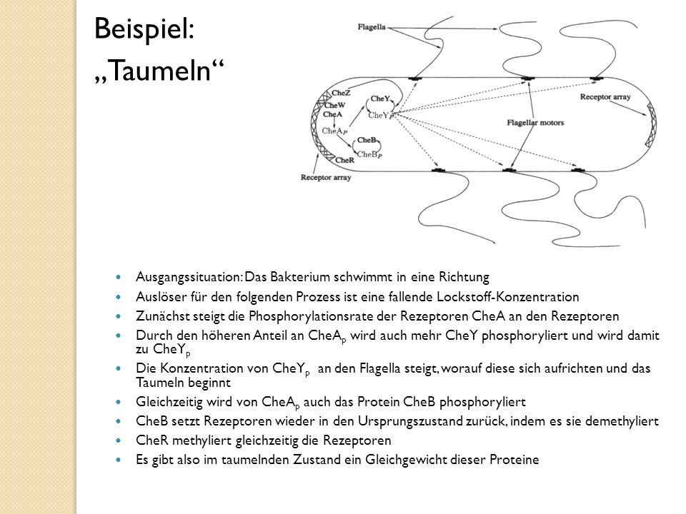 """Beispiel: """"Taumeln Ausgangssituation: Das Bakterium schwimmt in eine Richtung."""