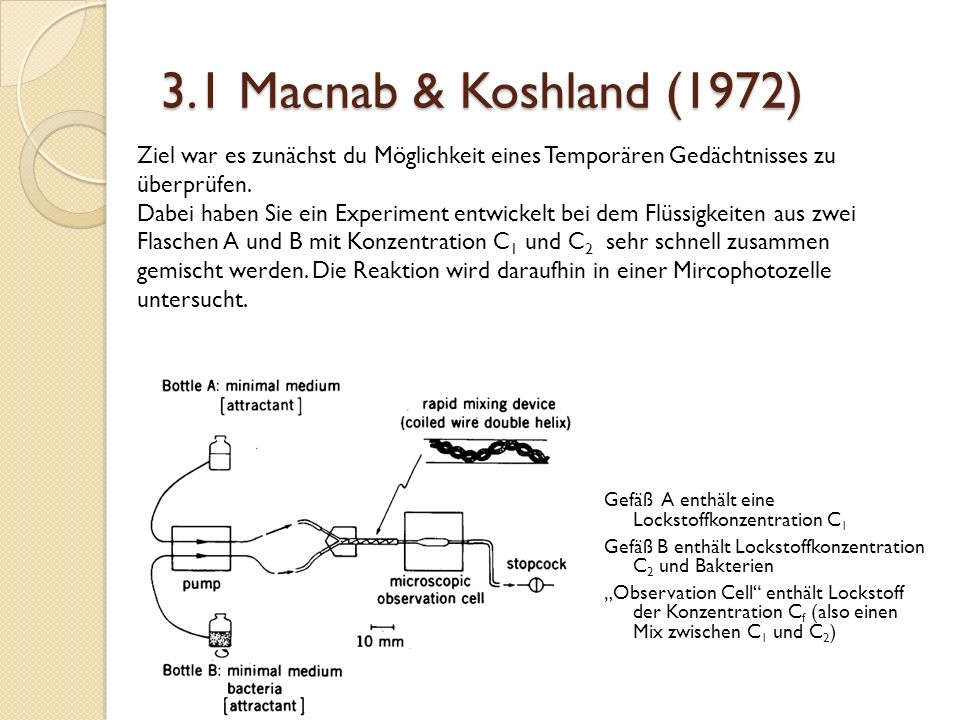 3.1 Macnab & Koshland (1972) Ziel war es zunächst du Möglichkeit eines Temporären Gedächtnisses zu überprüfen.