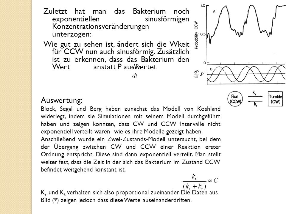 Zuletzt hat man das Bakterium noch exponentiellen sinusförmigen Konzentrationsveränderungen unterzogen: Wie gut zu sehen ist, ändert sich die Wkeit für CCW nun auch sinusförmig. Zusätzlich ist zu erkennen, dass das Bakterium den Wert anstatt P auswertet