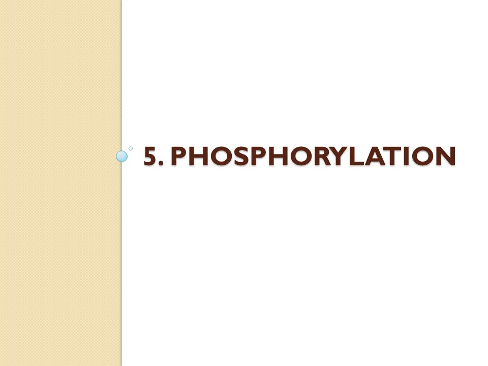 5. Phosphorylation