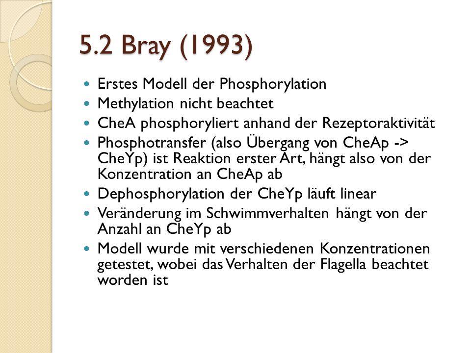 5.2 Bray (1993) Erstes Modell der Phosphorylation