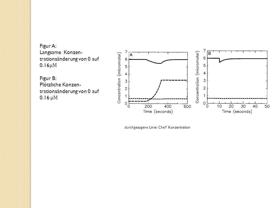 Langsame Konzen-trationsänderung von 0 auf 0.16μM