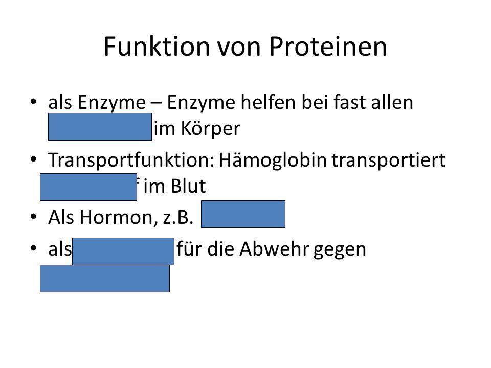 Funktion von Proteinen