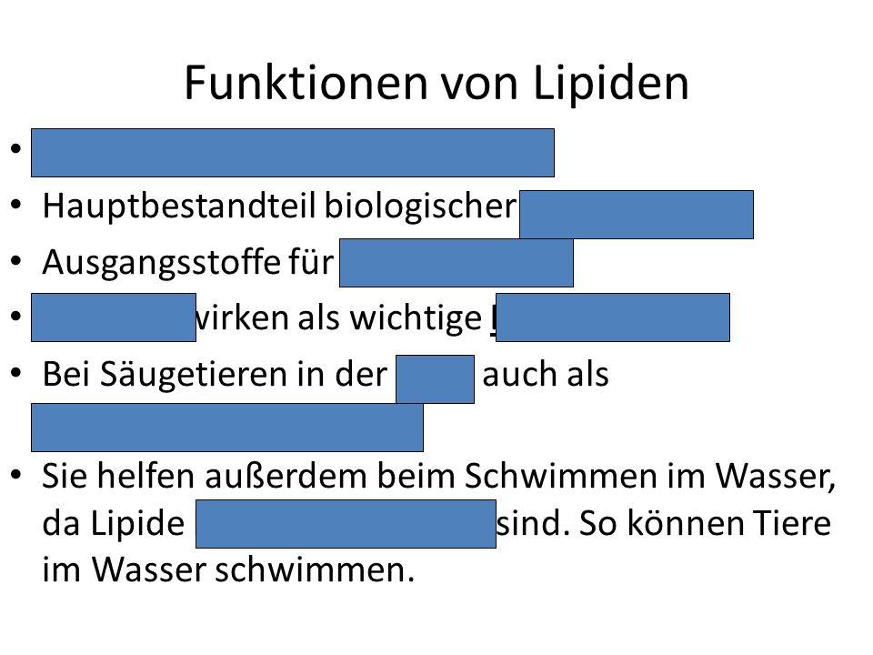 Funktionen von Lipiden