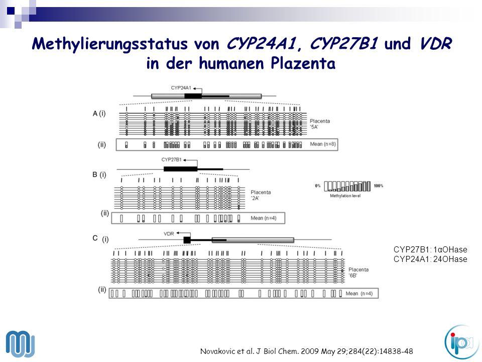 Methylierungsstatus von CYP24A1, CYP27B1 und VDR in der humanen Plazenta