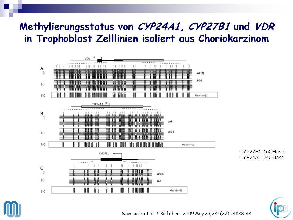 Methylierungsstatus von CYP24A1, CYP27B1 und VDR in Trophoblast Zelllinien isoliert aus Choriokarzinom