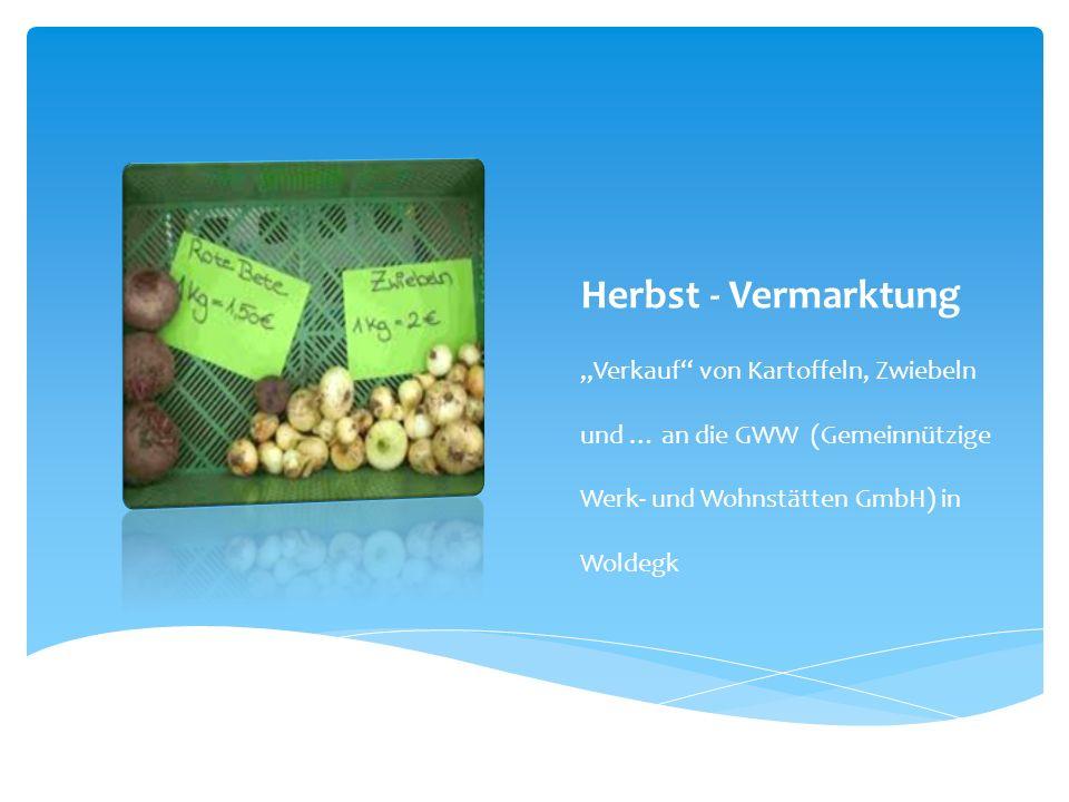 """Herbst - Vermarktung """"Verkauf von Kartoffeln, Zwiebeln und … an die GWW (Gemeinnützige Werk- und Wohnstätten GmbH) in Woldegk."""