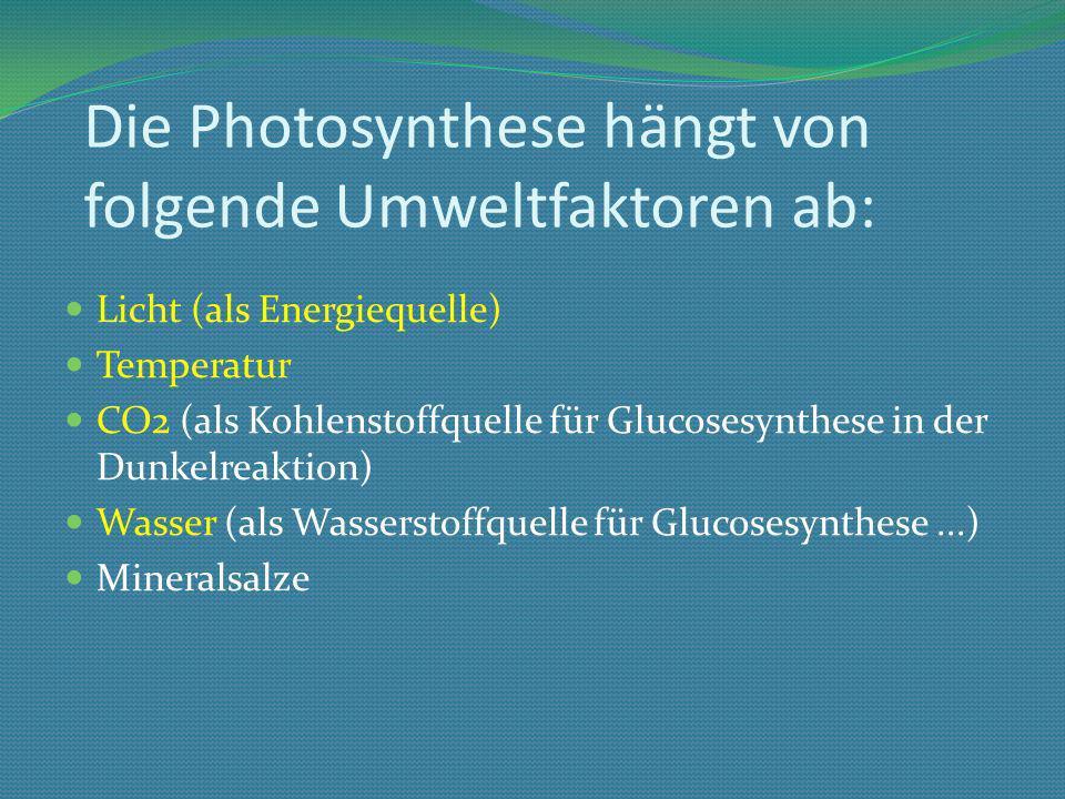 Die Photosynthese hängt von folgende Umweltfaktoren ab: