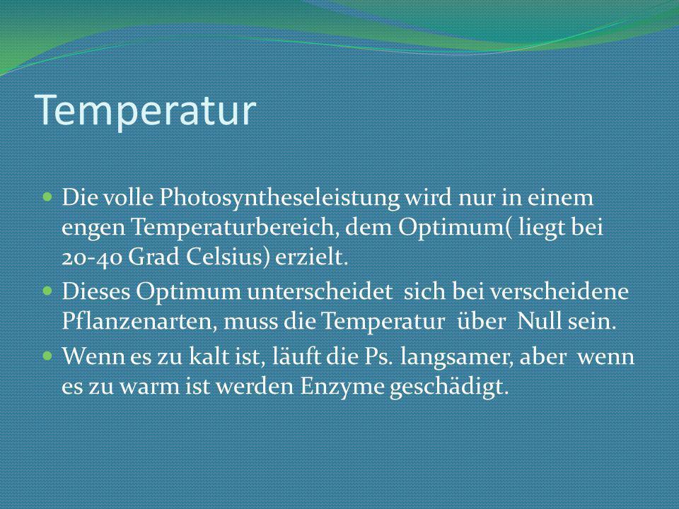 Temperatur Die volle Photosyntheseleistung wird nur in einem engen Temperaturbereich, dem Optimum( liegt bei 20-40 Grad Celsius) erzielt.