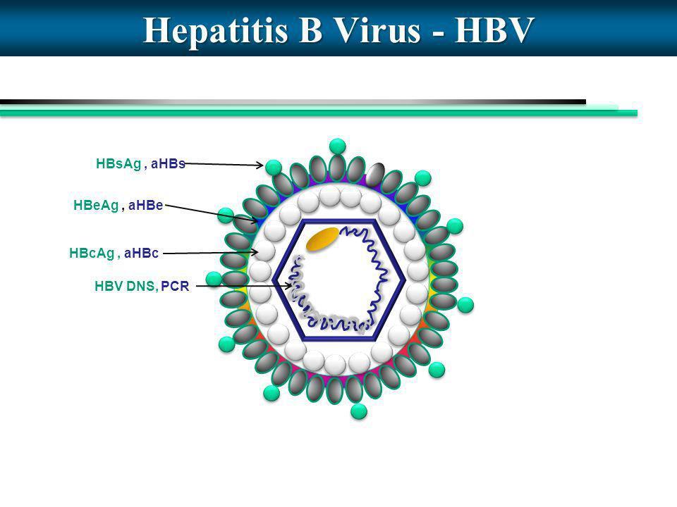 Hepatitis B Virus - HBV HBsAg , aHBs HBeAg , aHBe HBcAg , aHBc
