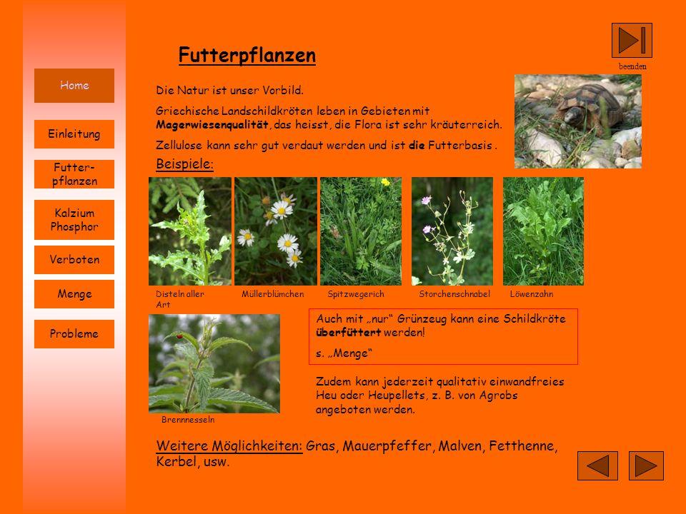 Futterpflanzen Beispiele: