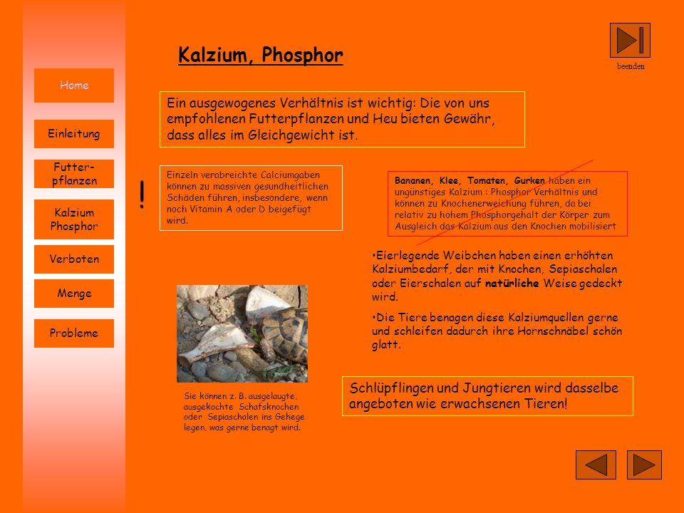 Kalzium, Phosphorbeenden. Home.