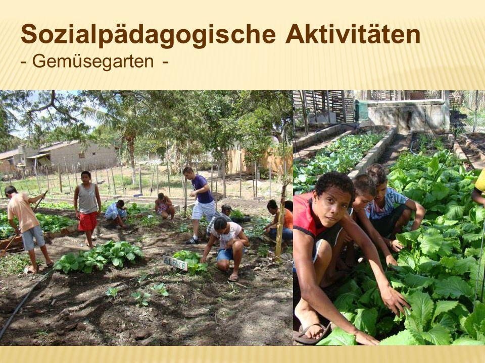 Sozialpädagogische Aktivitäten - Gemüsegarten -